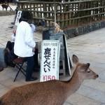 奈良 鹿せんべい