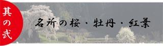 今阪屋の魅力名所の桜・牡丹・紅葉